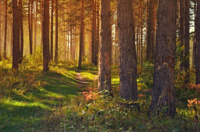 forêt-automne2